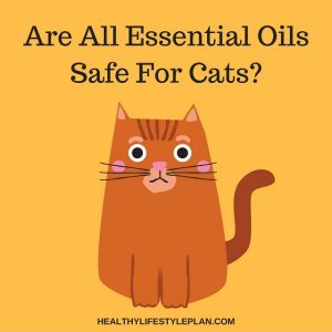 Are All Essential Oils Safe For Cats?
