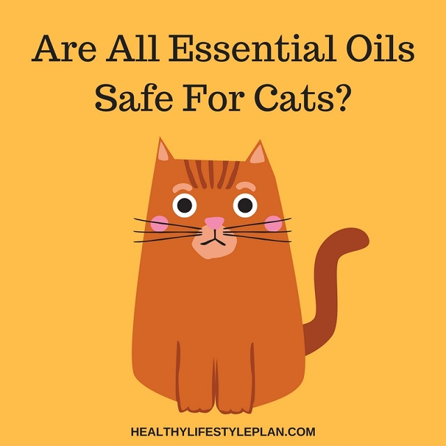 are all essential oils safe for cats. Black Bedroom Furniture Sets. Home Design Ideas