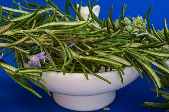 Stay focused with Rosemary essential oils